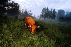 web_cowgirls_2